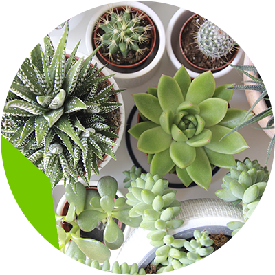 Erisa - What types of plants will look perfect