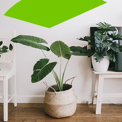 erisa - plants