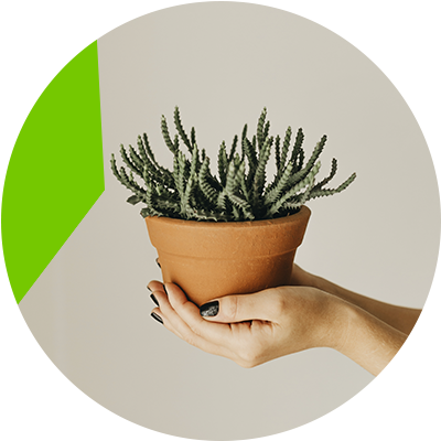 Erisa-affordable balcony changes-Plant
