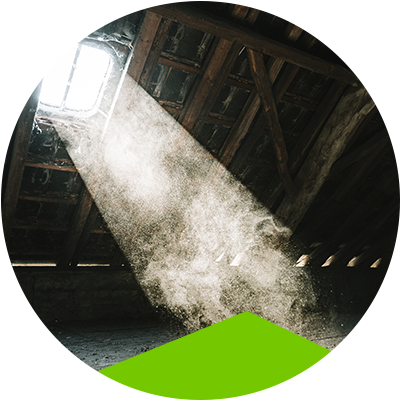 Erisa-Mold growth in your attic